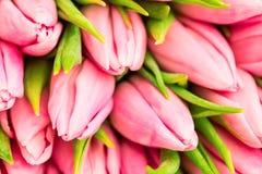 Trevlig naturlig bukett från rosa tulpan som en romantisk bakgrund Selektivt fokusera täta rosa tulpan upp Rosa tulpan fjädrar bl Royaltyfri Foto