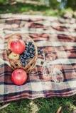 Trevlig ny mat och korg på gräset Fotografering för Bildbyråer