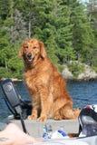 trevlig portait för hund Fotografering för Bildbyråer