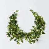 Trevlig prydnad av många gröna sidor Royaltyfri Foto