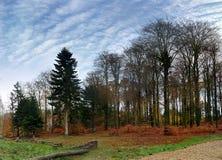 trevlig quiet för denmark skog Fotografering för Bildbyråer