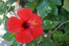 Trevlig röd blomma Arkivbilder