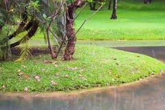 Trevlig sikt av trädgården och simbassängen i hotell Fotografering för Bildbyråer