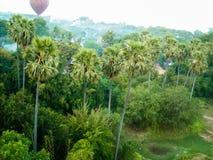 Trevlig sikt från djungeln arkivbild