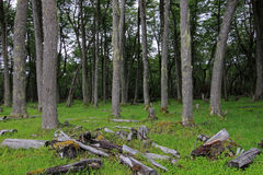 Trevlig skog, nära villanolla-` Higgins, Carretera Australl, Chile royaltyfria foton