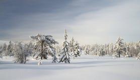 Trevliga Forest Park Arkivbild