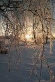 trevlig soluppgång i vinter Royaltyfri Bild
