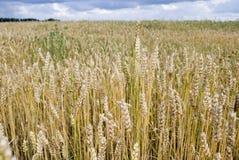 trevlig sommar för fält Arkivbild