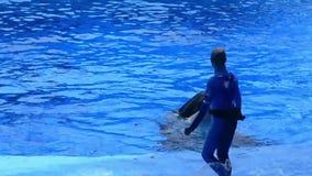 Trevlig späckhuggare som hälsar allmänheten på en havshow på Seaworld lager videofilmer