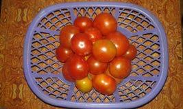 trevlig tomat Arkivfoton