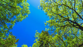 Trevlig trädkrona på bakgrunden den blåa himlen Royaltyfri Bild