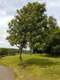 trevlig tree arkivbilder