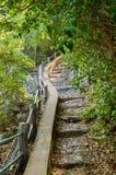 Trevlig vandringsled till och med djungeln i Khao Sam Roi Yot National PA arkivbild