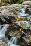 Trevlig vattenfall i solig dag Arkivfoton