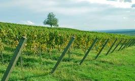 trevlig vingård för liggande arkivbild