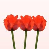 Trevliga blommor för röd vår Arkivfoton