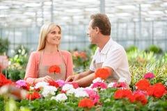 Trevliga blomsterhandlare som arbetar i växthuset Royaltyfri Fotografi