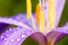 trevliga daggiga blommor Arkivbild