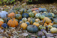 Trevliga färgrika halloween pumpor aground Arkivbild