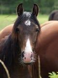 Trevliga hästar Royaltyfri Foto