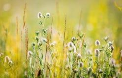 Trevliga lösa blommor på sommar fotografering för bildbyråer