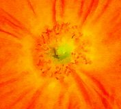 Trevliga orange Poppy Watercolor arkivfoton
