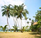 Trevliga palmträd i den blåa soliga himlen Fotografering för Bildbyråer