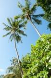Trevliga palmträd i den blåa soliga himlen Royaltyfria Foton