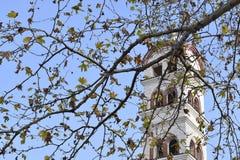 Trevliga platanos förgrena sig med klockstapeln på bakgrunden Royaltyfri Bild