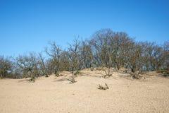 Trevliga sandvågor med träd och blå himmel Royaltyfri Fotografi