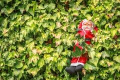 Trevliga Santa Claus som stiger ned i mitt av växterna Arkivbild