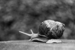 trevliga snails två Fotografering för Bildbyråer