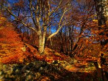 trevliga trees Fotografering för Bildbyråer