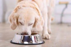 Trevligt äta för hund Fotografering för Bildbyråer