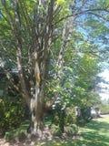 Trevligt att ha träd royaltyfria bilder