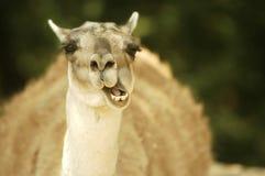 trevligt djur Royaltyfri Foto