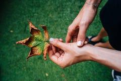Trevligt gult blad för kvinnahåll i hand fotografering för bildbyråer