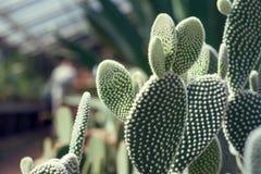 Trevligt kaktusfoto Royaltyfri Foto