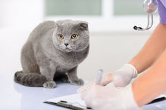 Trevligt kattsammanträde på tabellen fotografering för bildbyråer