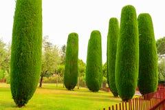 Trevligt klippt träd Fotografering för Bildbyråer