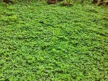 Trevligt lyckligt gräs Arkivfoton
