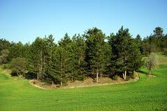 Trevligt planterade träd Arkivfoton