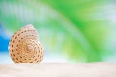 Trevligt snäckskal med havet, stranden och seascape Royaltyfri Bild