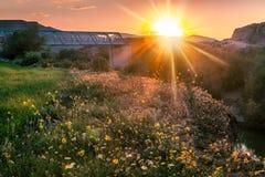 Trevligt solljus i naturen l är lyckligt royaltyfri foto