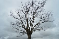 Trevligt träd utan sidor med en fågelredesnickare In The Village av Medinaceli Arkitektur historia, lopp royaltyfri foto