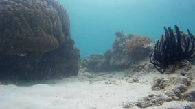 Trevligt undervattens- liv och tropisk fisk arkivfilmer
