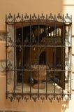 Trevligt Venetian stilfönster med en vas inom den i Chania Historiearkitekturlopp royaltyfri fotografi