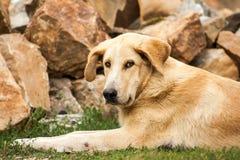Trevligt vila för hund royaltyfri bild