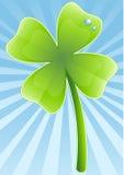 trevo das Quatro-folhas Foto de Stock
