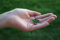 Trevo de Fourleafed na mão fêmea Foto de Stock